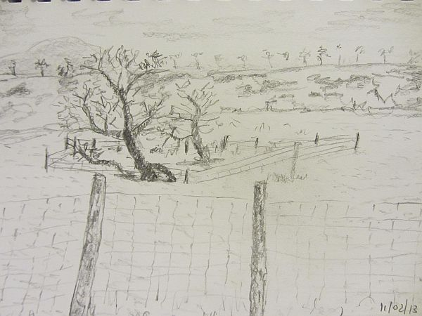 white fields